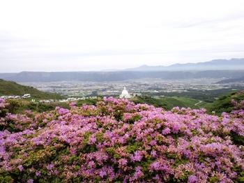 仙酔峡のミヤマキリシマと外輪山.JPG